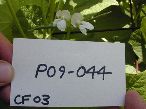 P09-044 CF03 Fl2