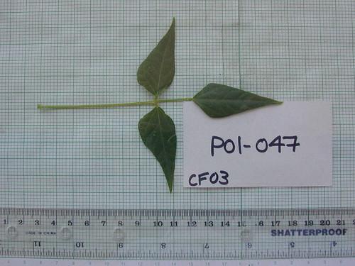 P01-047 CF03 L