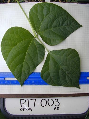 P17-003 CF05 L