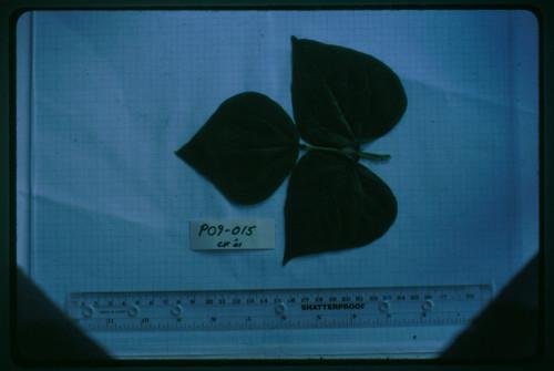 P09-015 CF01 L