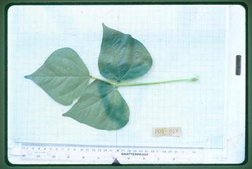 P09-027 CF02 L