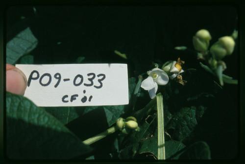 P09-033 CF01 Fl1