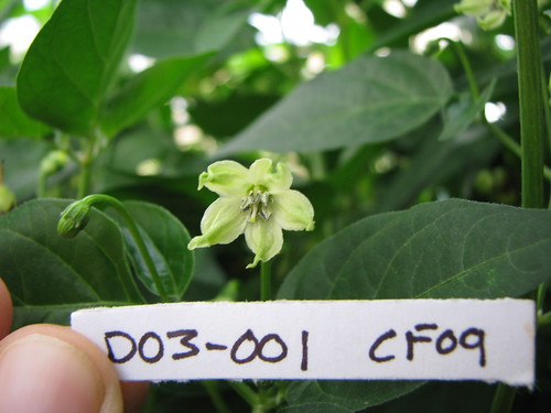 D03-001 CF09 Fl3