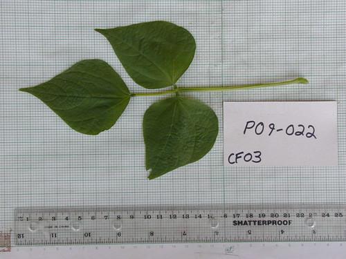 P09-022 CF03 L