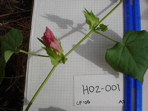 H02-001 CF05 Fl1
