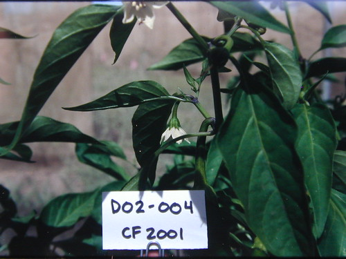 D02-004 CF01 Fl1