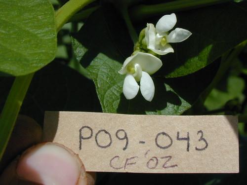 P09-043 CF02 Fl