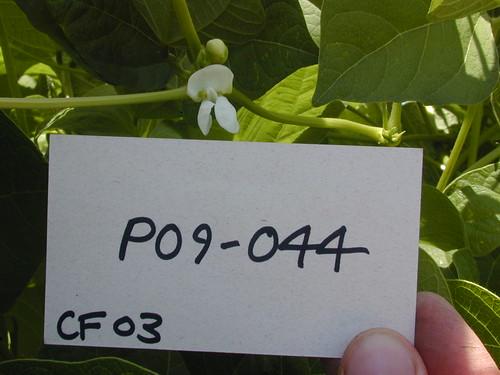 P09-044 CF03 Fl3