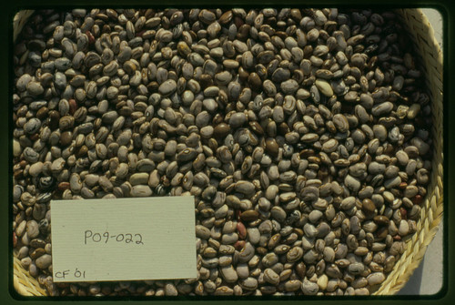 P09-022 CF01 S