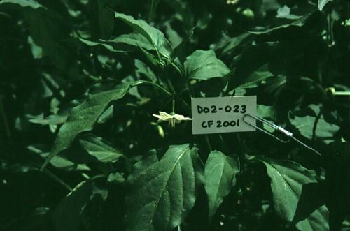 D02-023 CF01 Fl2