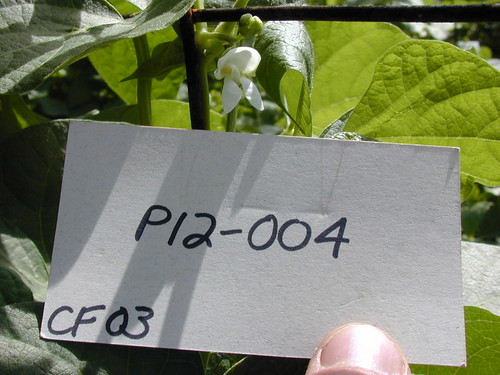 P12-004 CF03 Fl