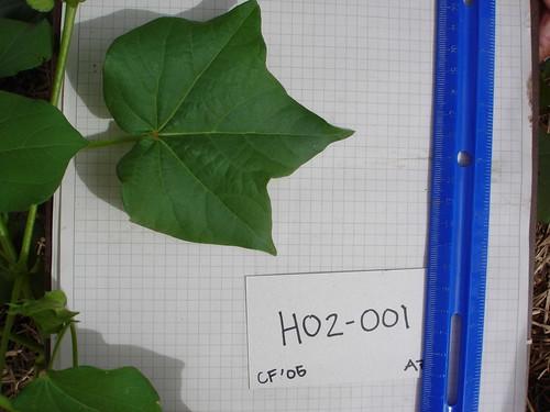 H02-001 CF05 L
