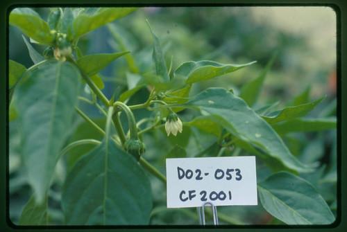 D02-053 CF01 Fl2