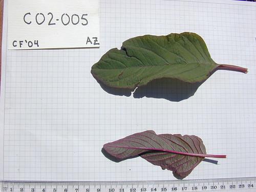 C02-005 CF04 L2