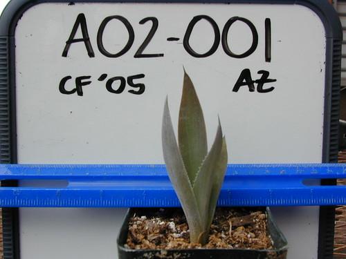 A02-001 CF05 P2