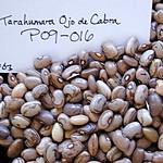 P09-016 CF03 S1