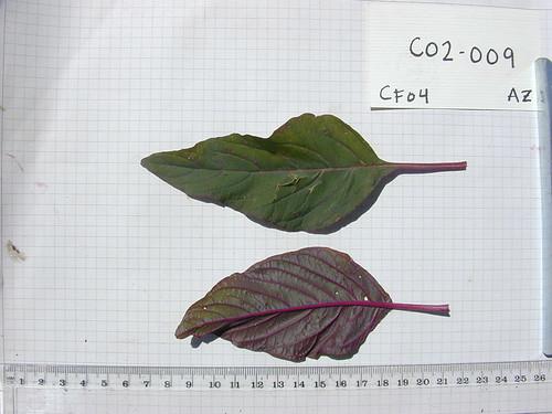 C02-009 CF04 L2