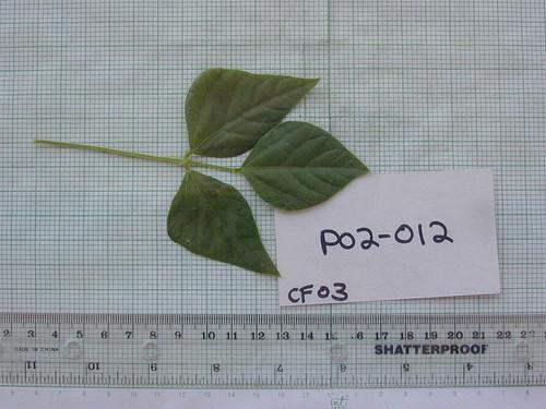 P02-012 CF03 L