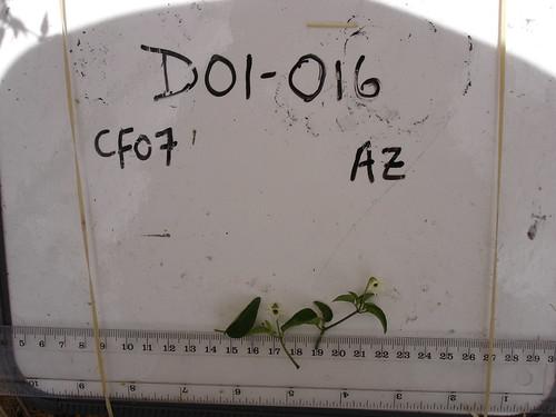 D01-016 CF07 Fl, L1