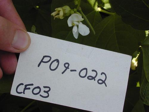 P09-022 CF03 Fl1
