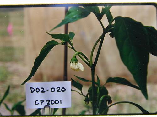 D02-020 CF01 Fl