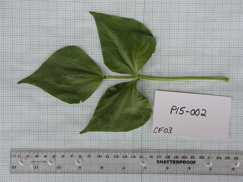 P15-002 CF03 L