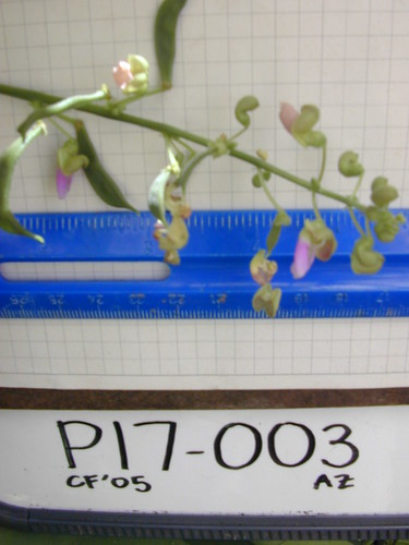 P17-003 CF05 Fl3