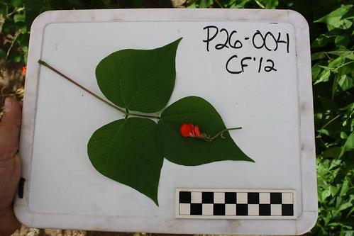 P26-004 CF12 L, FL