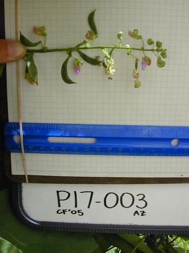P17-003 CF05 Fl2