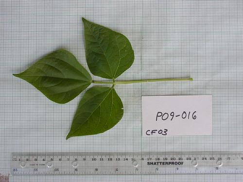 P09-016 CF03 L