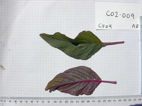 C02-009 CF04 L1