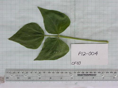P12-004 CF03 L