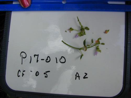 P17-010 CF05 Fl