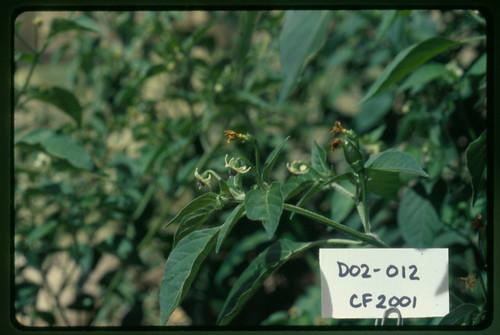 D02-012 CF01 Fl