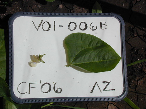 V01-006B CF06 F1