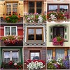 Flowers & Windows