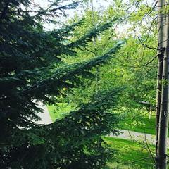 Whistler greens