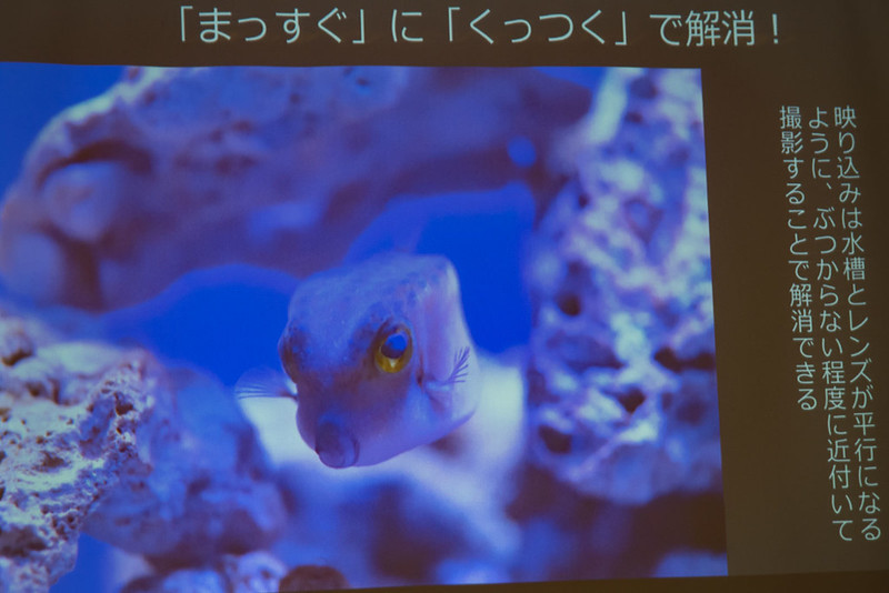水族館-2