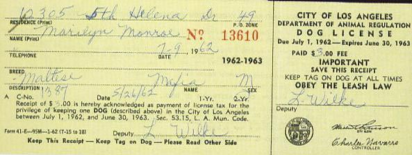 License for Maf, Marilyn's dog