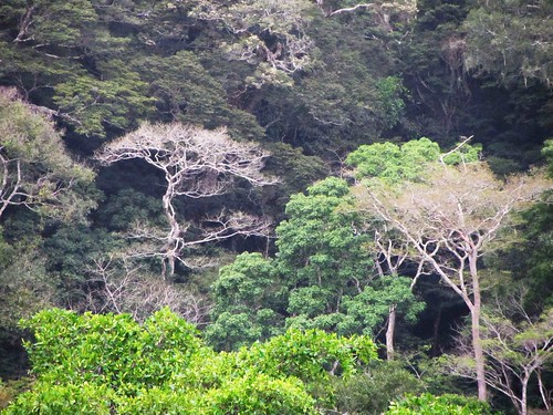 a vivid forest below