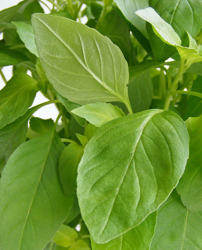 manglak, thai lemon basil