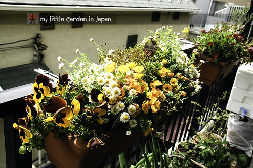 my little garden in japan 2012 3