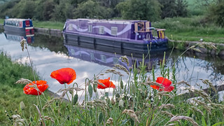 poppies on a bridge