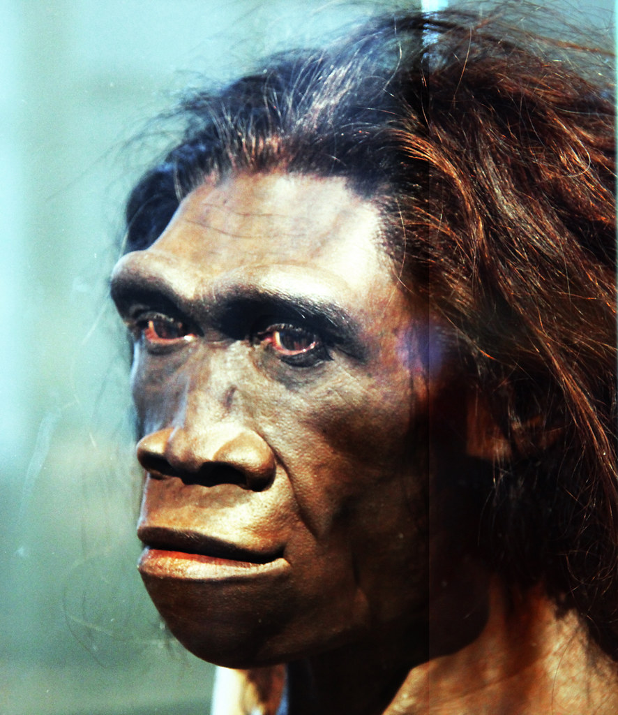 Homo erectus adult female - head model - Smithsonian Museum of Natural History - 2012-05-17