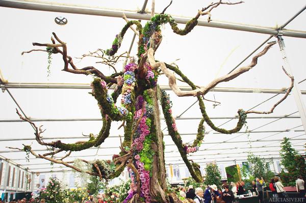 aliciasivert, alicia sivertsson, london, england, chelsea flower show 2011, flower, flowers, nature, blossom, bloom, garden, trädgård, trädgårdsmässa, blommor, blomster, växtlighet, natur, nadas, wood yew waste