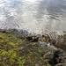 Small photo of Alice Lake, Squamish
