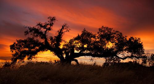 [フリー画像素材] 自然風景, 樹木, 朝焼け・夕焼け, 風景 - アメリカ合衆国 ID:201207042000