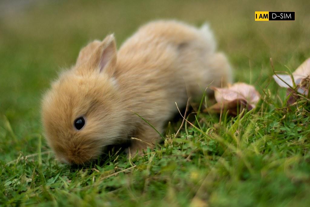 Baby Rabbit (4)