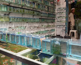 Fishes for sale at Malang's Bird Market