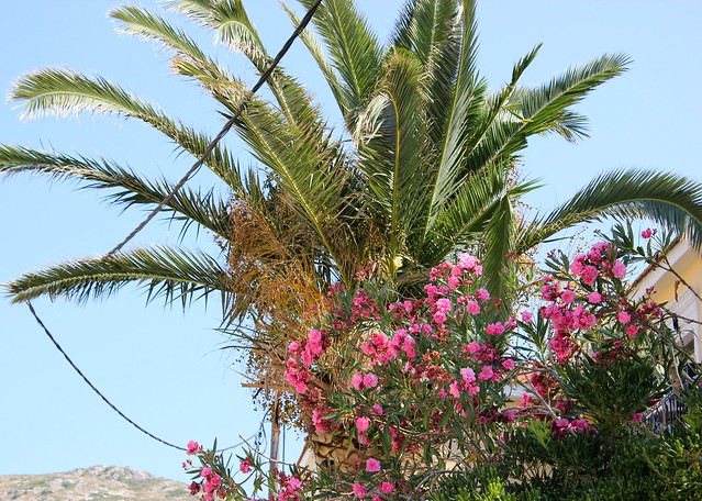 Kreikka, Samos 2012 1486